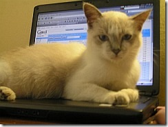 cat_laptop240